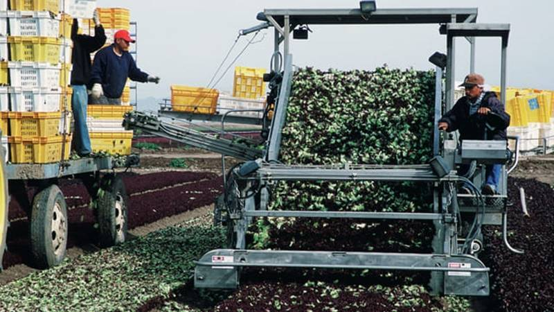 bisnis pertanian milenial