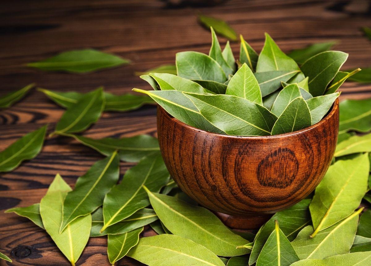 Berita terbaru hari ini: 3 cara ampuh membasmi kecoa di rumah dengan bahan alami.